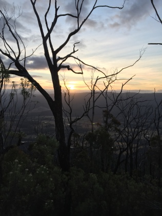 Sunset through the burnt trees