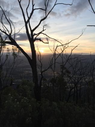 Sunset through the burnt trees